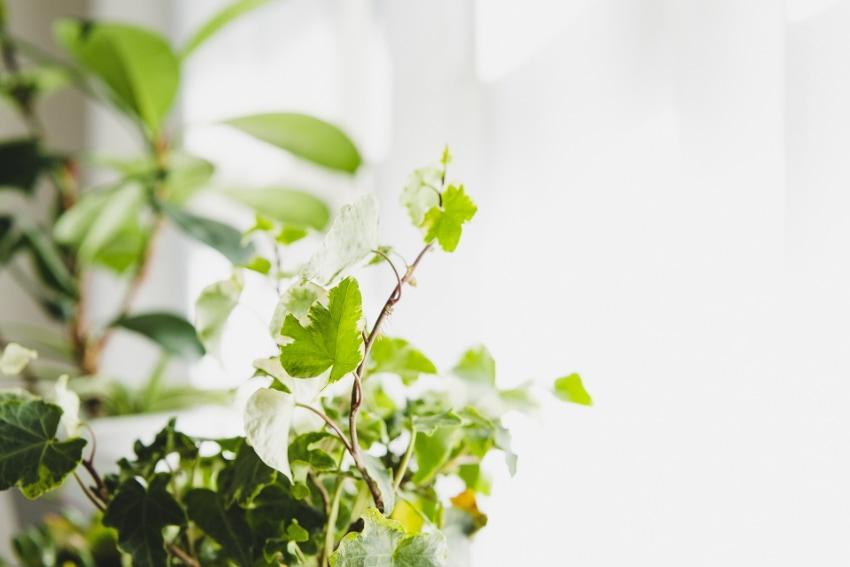 観葉植物はポピュラーなインテリア