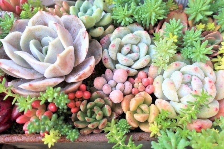 多肉植物は色も形も様々!小物として使える