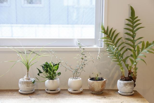 観葉植物を元気に育てよう!押さえておきたい育て方のポイントとは