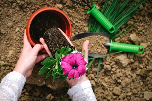 花の基本の育て方!元気に咲かせるために押さえておきたいポイント