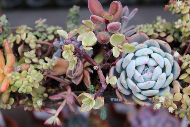 多肉植物を飾って楽しいインテリア!おしゃれな小物として活用しよう