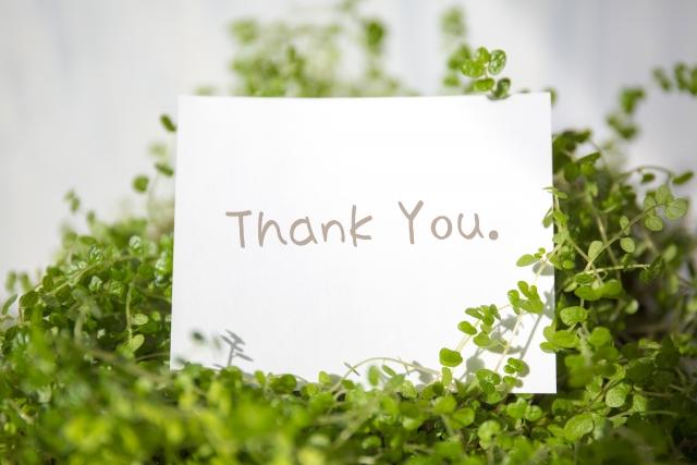 母の日に贈りたい観葉植物!インテリアにもなるギフトの選び方