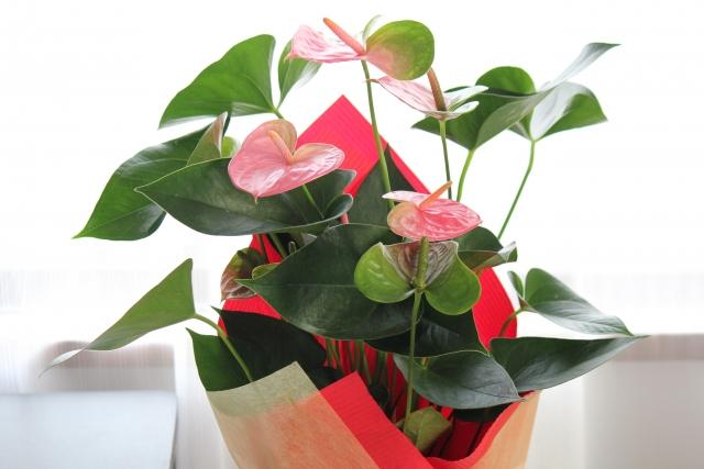 育てられる癒しのギフトはいかが?観葉植物の喜ばれる選び方