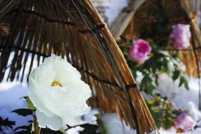植物が元気に冬を越せるために!ガーデニングの寒さ対策を知ろう