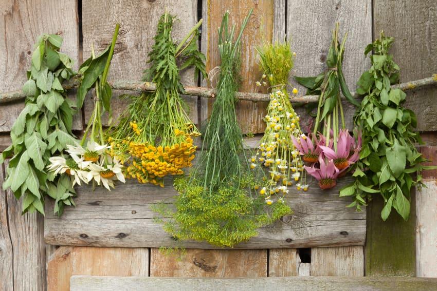 生花からドライフラワーを作る方法