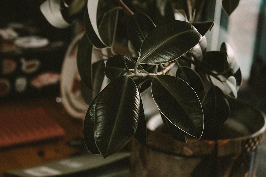 男性にもおすすめなインテリアと観葉植物の例