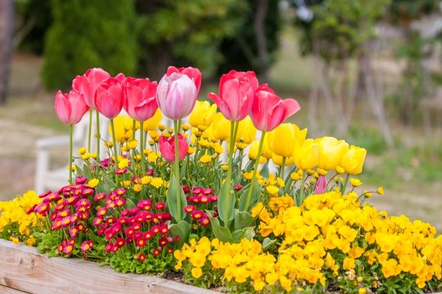 色とりどりの花たちに癒される!寄せ植えに挑戦しよう