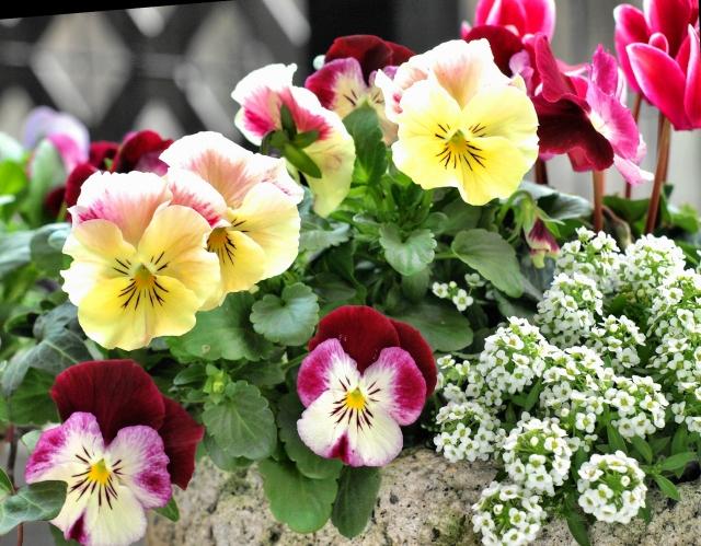 季節の花で作る寄せ植えのポイント!花の選び方と作り方のコツとは