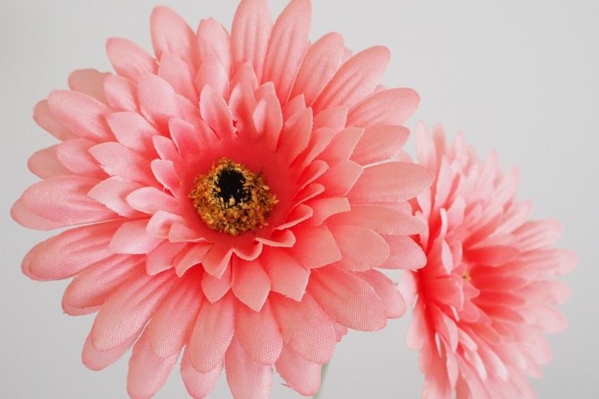 花の選び方で楽しめるインテリア
