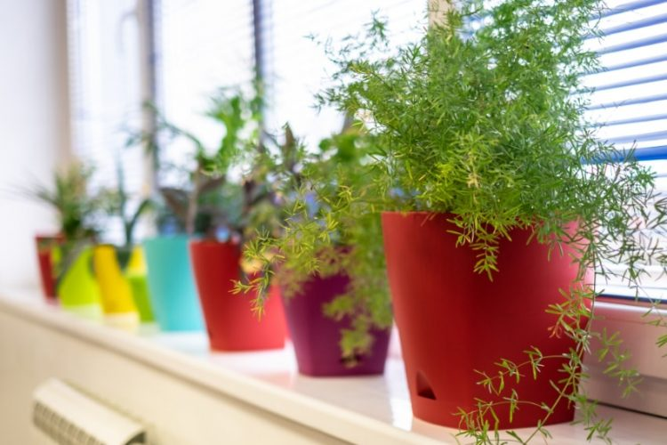 観葉植物の最適な置き場所とは?管理とインテリアの面から解説