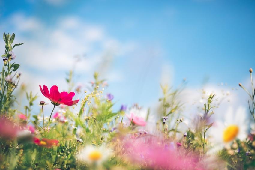 花束にぴったりな春の花といえば