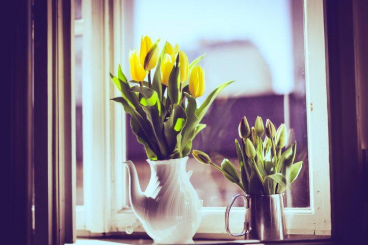 知らないと損!チューリップの切り花を長持ちさせるコツとは?
