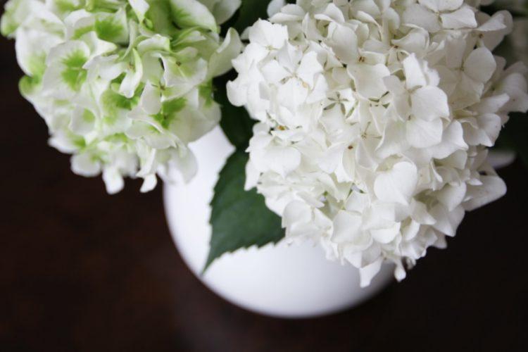 ほんのひと手間で切り花が長持ち!あじさいの基本的なお手入れ方法をご紹介