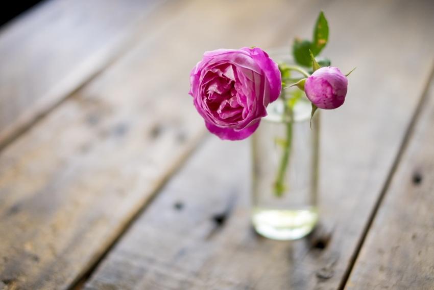 水と花瓶を清潔に保つ