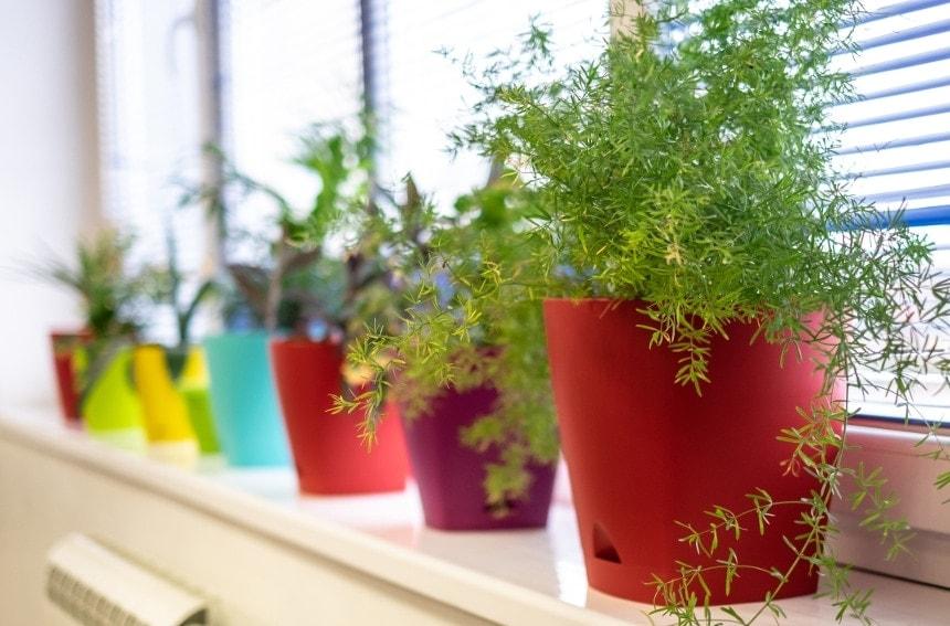 インテリアにする観葉植物の選び方