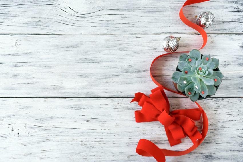 観葉植物で作るクリスマスコーナー