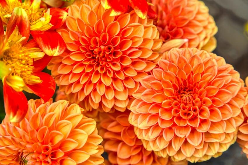 秋色で飾るおしゃれなスワッグ