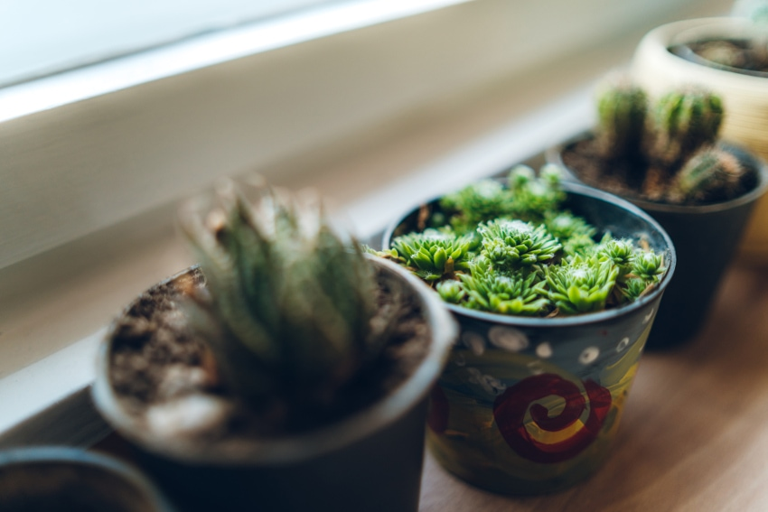 ナチュラルな雰囲気を楽しむ多肉植物の飾り方