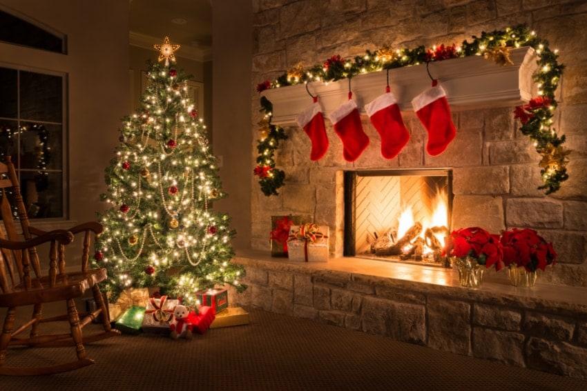 クリスマスを演出してくれる観葉植物とは
