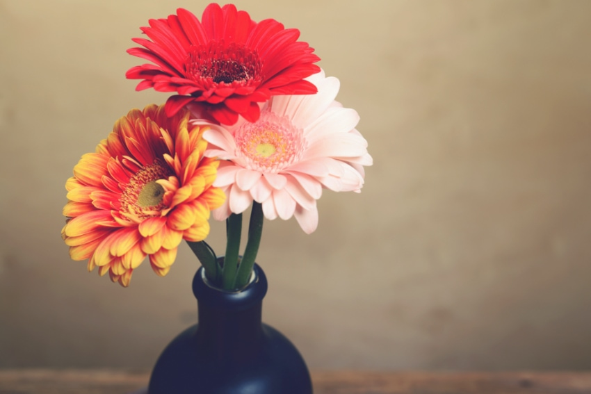 バラもガーベラも色によって花言葉が異なる