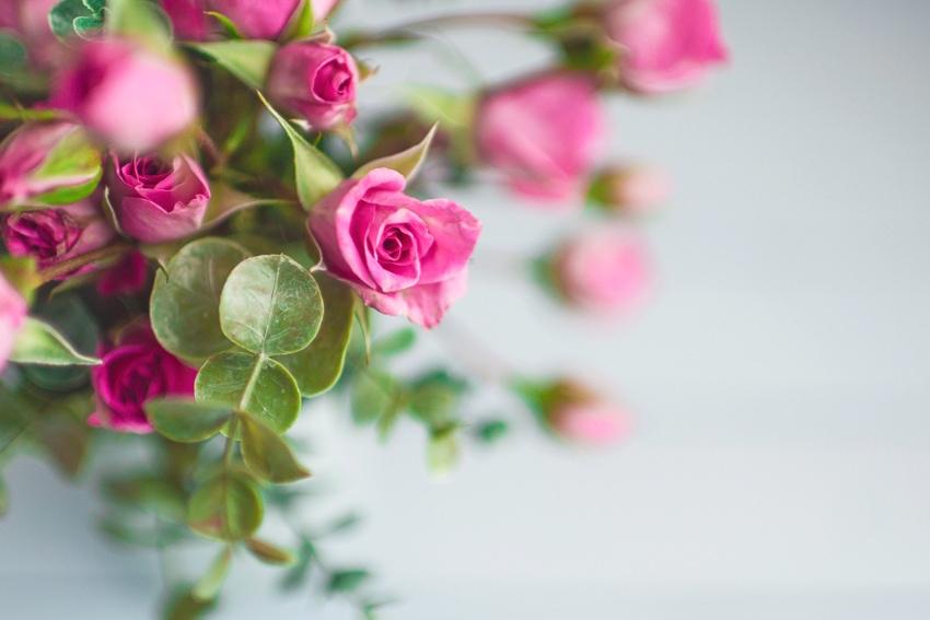 バラとガーベラはピンクがおすすめ