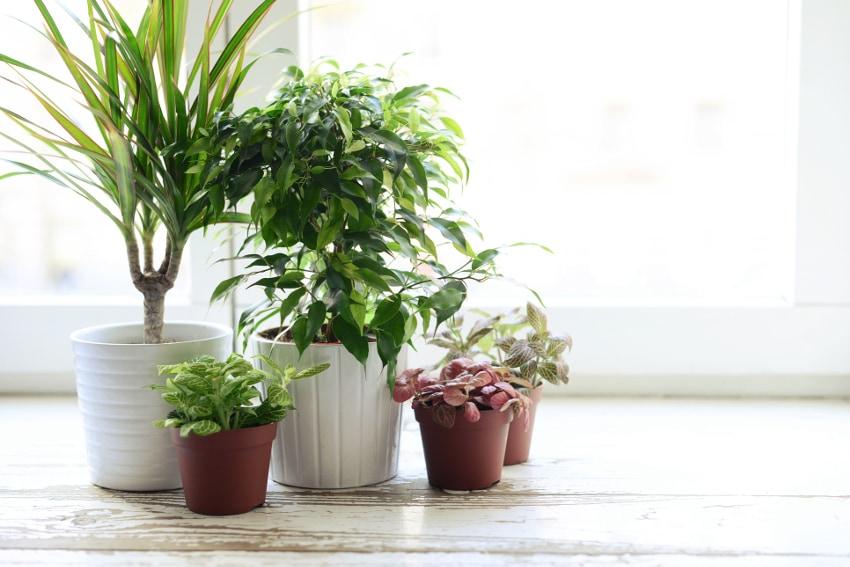 小さめサイズの観葉植物