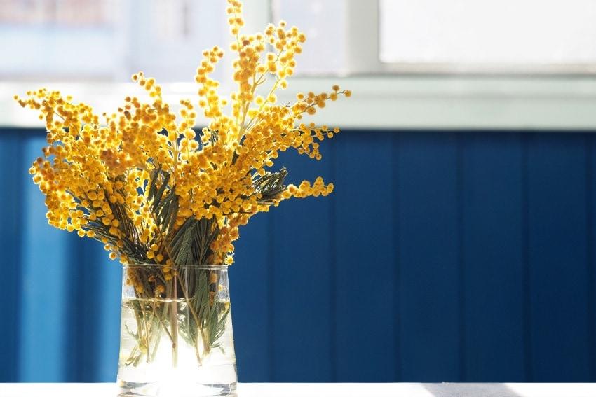 色や形が可愛らしい春の花