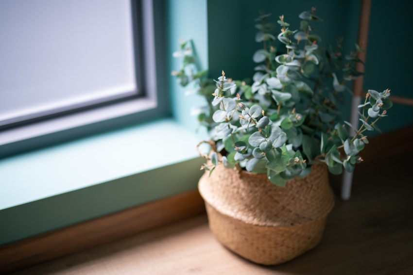 観葉植物が引越しのプレゼントにおすすめな理由
