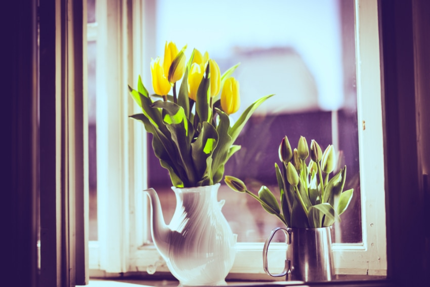 縁起の悪い花言葉を持つ花