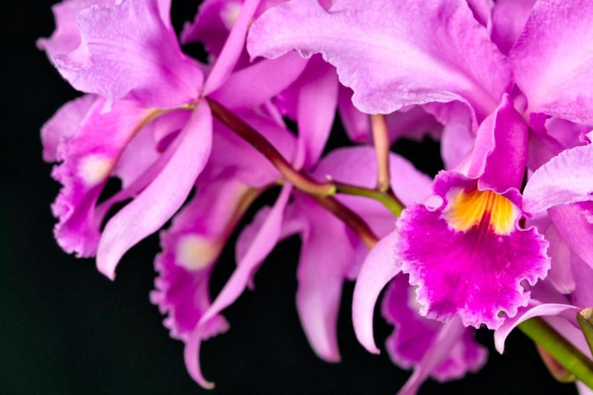 冬生まれの人に贈りたい花