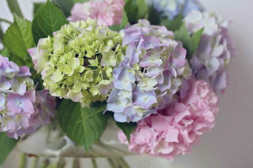 夏生まれの人に贈りたい花