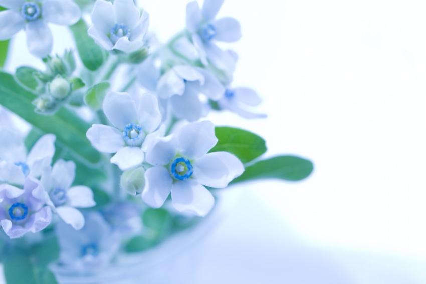 バレンタインデーに贈りたい花束