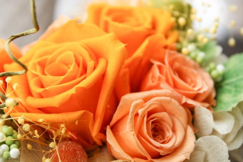 お見舞いにふさわしい花の種類や色合いとは