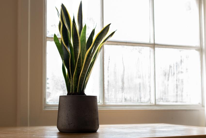インテリアにぴったりでおしゃれな観葉植物