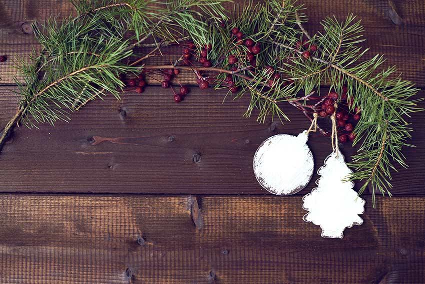植物や色でクリスマスを表現