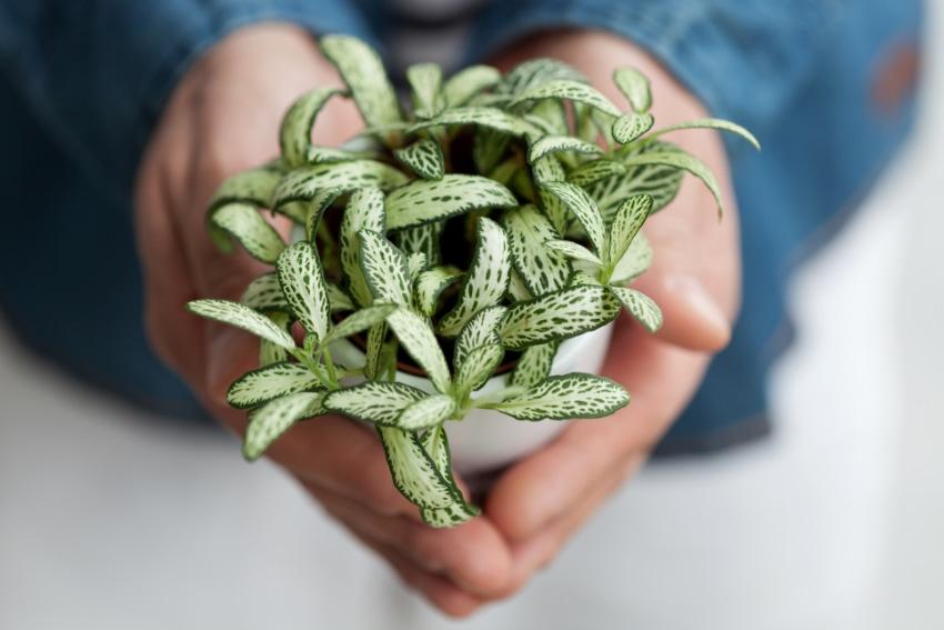 観葉植物がプレゼントにおすすめな理由