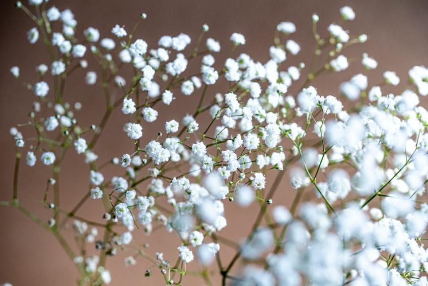 小ぶりな花はノスタルジックに