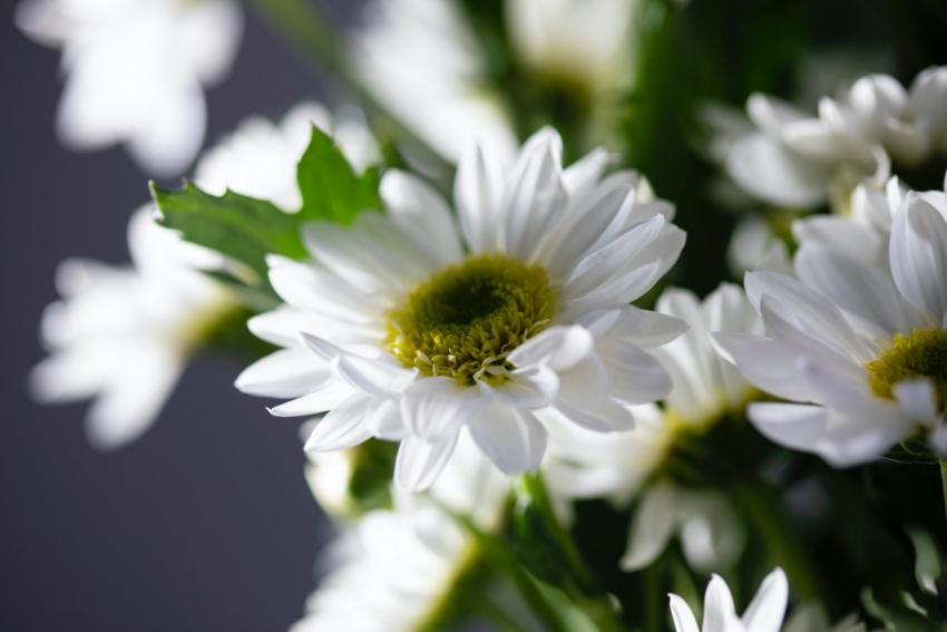 縁起の悪い花を避ける