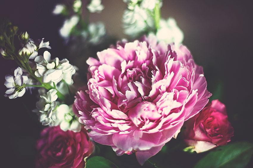 主役になる華やかな花は部屋のアクセントに