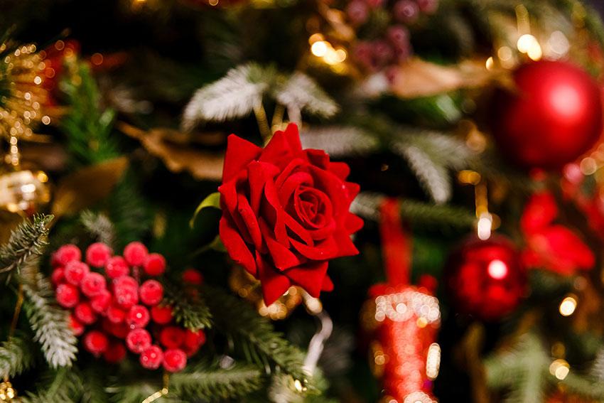 クリスマスといえば!定番の3つの花