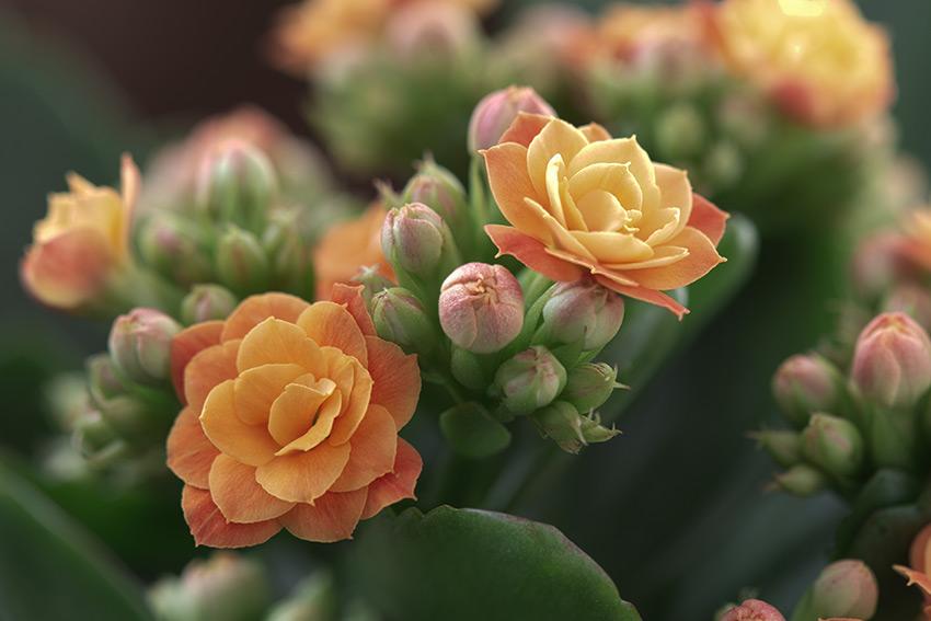 花が咲くもの