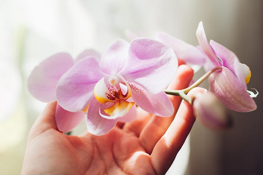 記念日向きの喜ばれる花の選び方