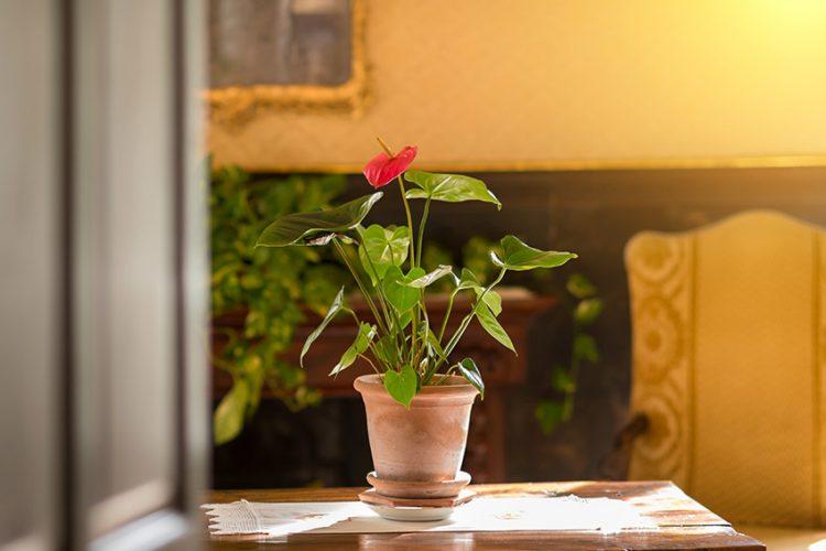 彼女の誕生日に贈りたい!とっておきの観葉植物をご紹介