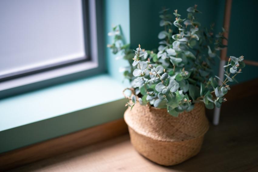 観葉植物をおしゃれに見せる工夫を