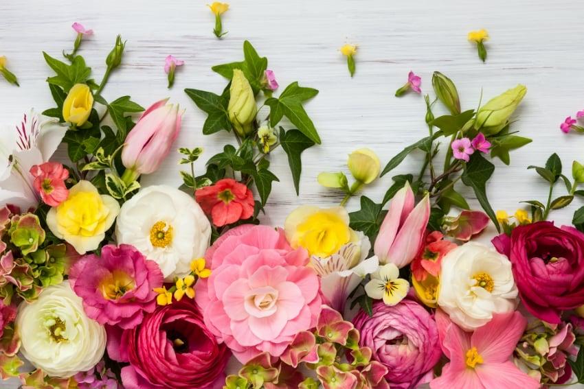 プレゼントにふさわしい花と注意が必要な花