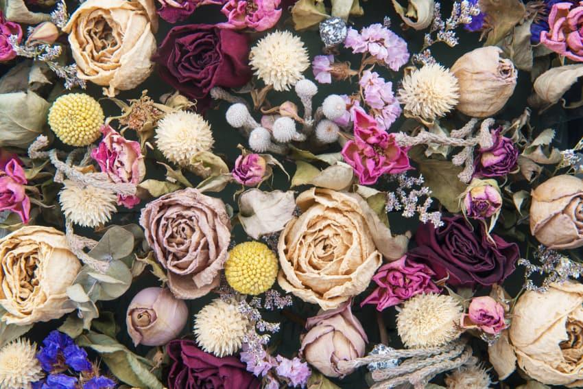 ドライフラワーにおすすめの花