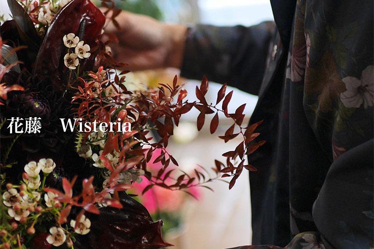 花藤 Wisteria