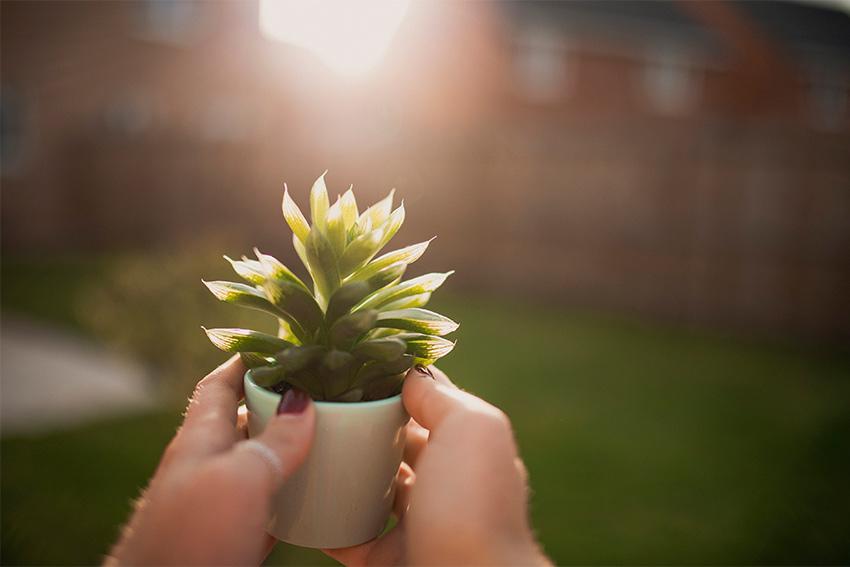 成長していく観葉植物をプレゼントする意味