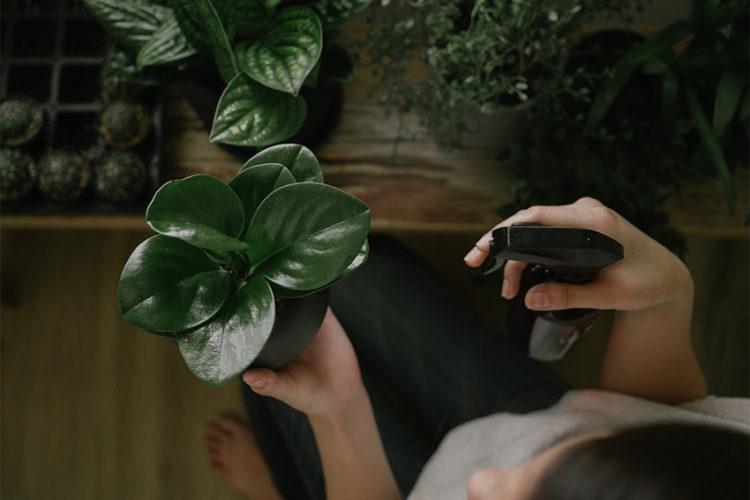 観葉植物を使ったおしゃれなインテリア!押さえておきたい育て方のポイント