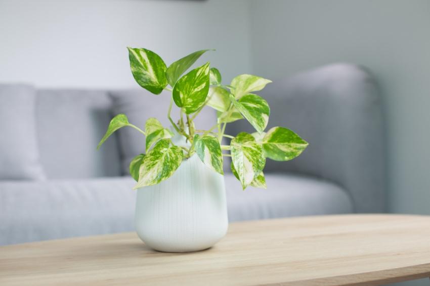 観葉植物を記念日のプレゼントに選ぶということ